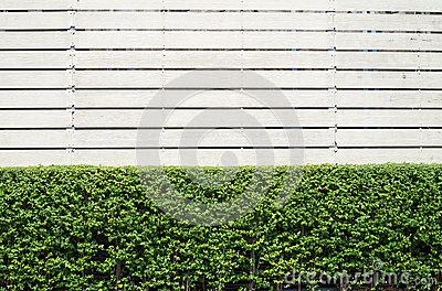 Gardening and wooden frame background