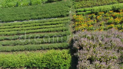 Gardens in the countryside. Camera flying over the beautiful gardens full of blooming flowers in the middle of the countryside on sunny summer day stock footage