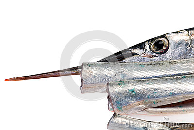 The Garfish