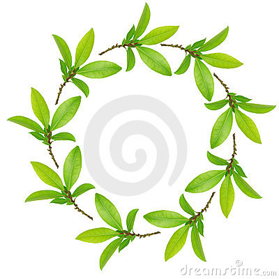 Garland of Bay Leaves