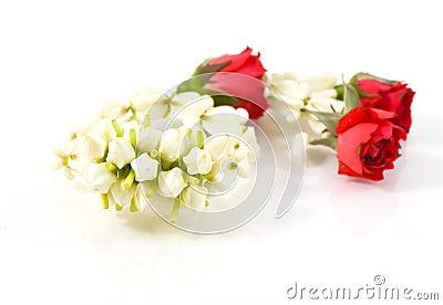 Garland jasmine