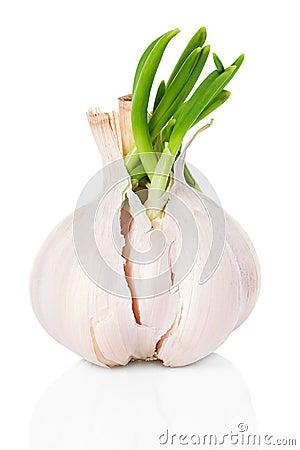 Free Garlic Stock Images - 39517714
