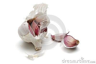 Garlic, alium sativum
