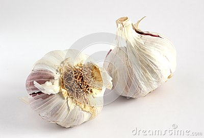 Garlic bulbs (Allium sativum)