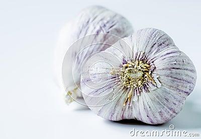 Garlic - closeup