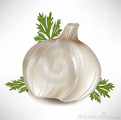 Garlic with green parsley leaves