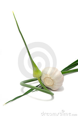 Free Garlic Head With Scape Stock Photo - 16984110