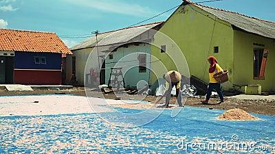 Garnelentrockner auf dem Boden in Cilacap, Java, Indonesien stock footage