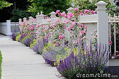garten zaun mit rosen stockfotos bild 9825693. Black Bedroom Furniture Sets. Home Design Ideas