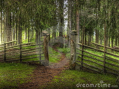 Gateway on forest path