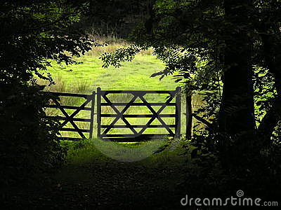 Gateway out of the woods