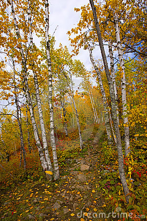 Gateway to an October Trail