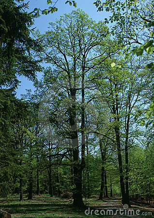 Free Gateway To The Spring Woods Stock Photos - 19001233