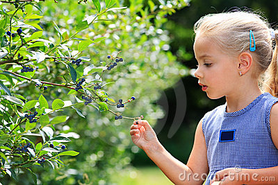 Gather blueberries