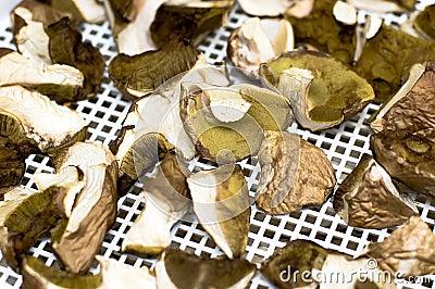 Gathered mushrooms boleti and bay boletes Editorial Image
