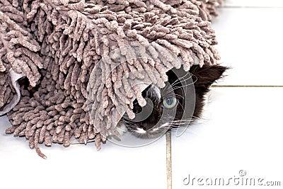 Gatinho que esconde sob o tapete