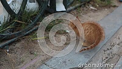 Gatito de la calle en el pavimento metrajes