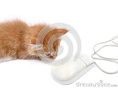 Gatito que juega con el ratón del ordenador