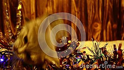 Gatito que juega con las decoraciones de la Navidad