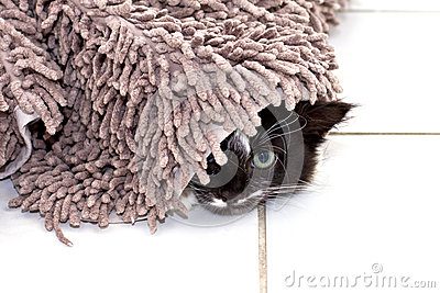 Gatito que oculta bajo la alfombra