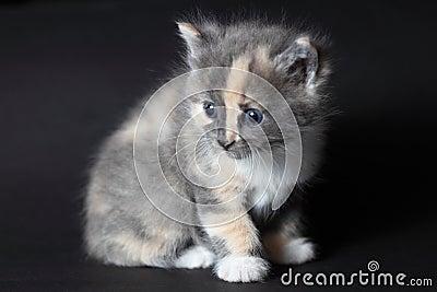 Gato agradável