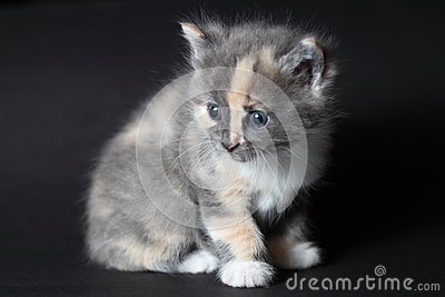 Gato agradable