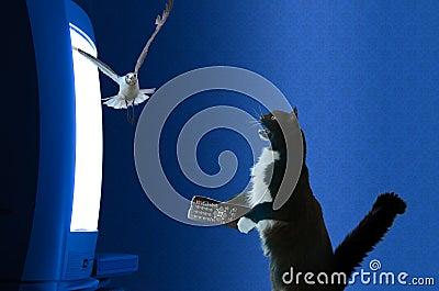 Gato com a televisão de observação de controle remoto