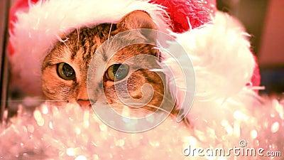 Gato como Santa Claus no tampão e no ouropel do Natal HD video estoque