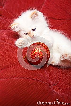 Gato con la bola de la navidad foto de archivo imagen - Bola de navidad con foto ...