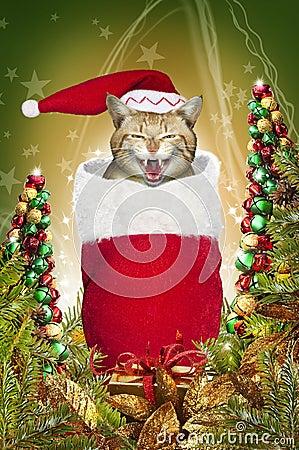 Gato de la media de la Navidad