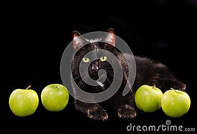 Gato de ojos verdes negro entre manzanas verdes