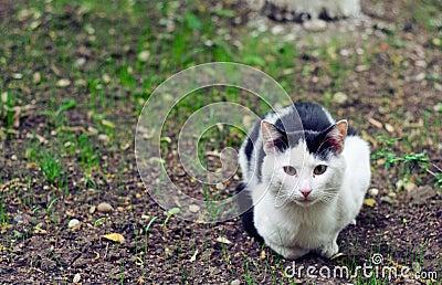 Gato disperso em um jardim