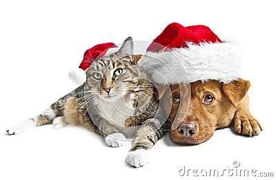 Gato e cão com os chapéus do vermelho de Santa