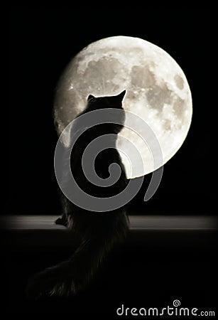 Gato e lua