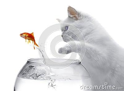 Gato e um peixe do ouro