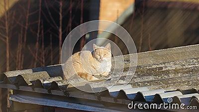 Gato em um telhado filme