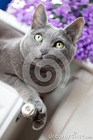 Gato en el radiador