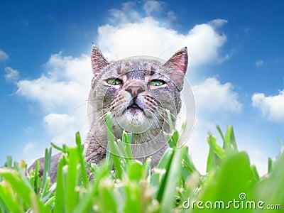 Gato en hierba