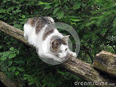 Gato en la cerca