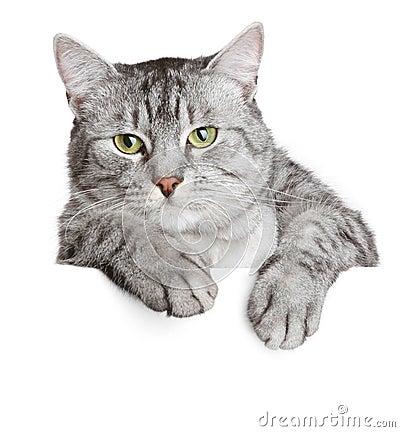 Gato gris en una bandera