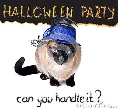 Gato hilarante siamés saltón nervioso divertido de la bandera del partido de Halloween
