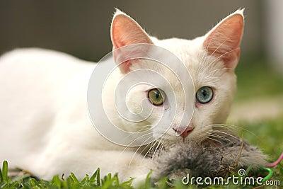 Gato lindo con el ratón del juguete