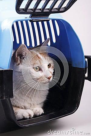 Gato na caixa do transporte