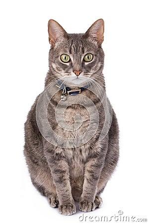 Gato obeso debido a la castración
