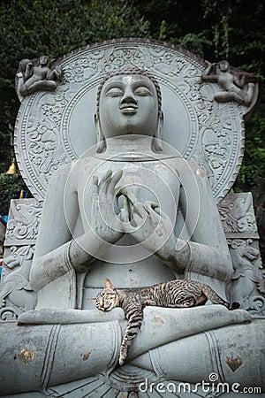 Gato que dorme em estátuas da Buda do regaço