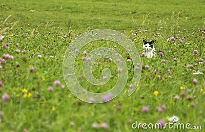 Gato que está al acecho en el prado del verano