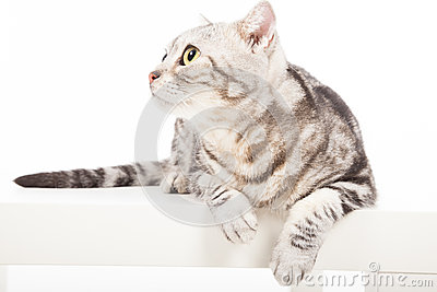 Gato que mira para arriba