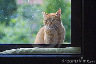 Gato que senta-se no indicador