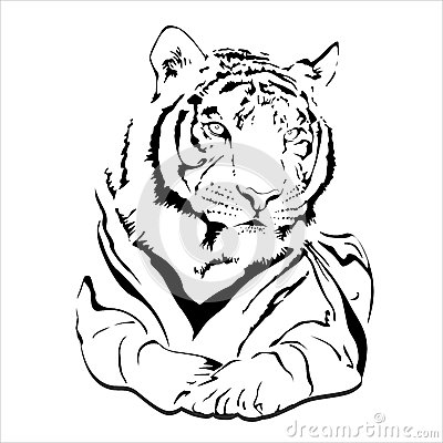 Gato selvagem grande