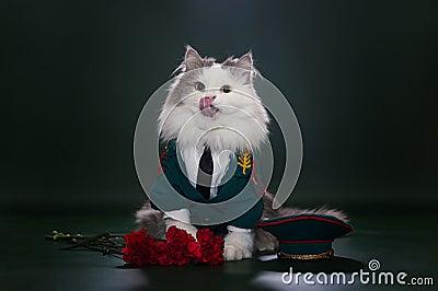 Gato vestido como general